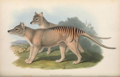 Revivir animales extintos